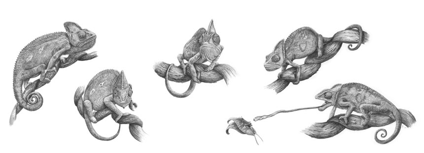 Chameleon-Character-Study-SOLD