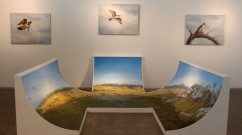 Peregrine-Installation-view