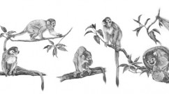 Squirrel-Monkey-Character-Study