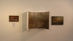 Tawny-Frogmouth-Installation-view