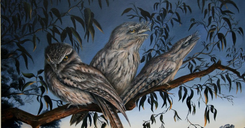 Tawny-Frogmouths1