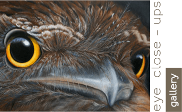eye of tawny frogmouth