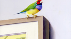 volourful bird sitting on edge of picture frame