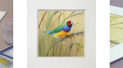 Duality (Gouldian Finches) Suite
