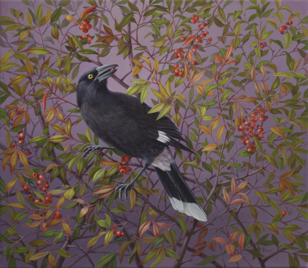 Pied Currawong       acrylic on canvas