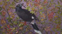Pied Currawong       acrylic on canvas      35.5 x 40.5cm